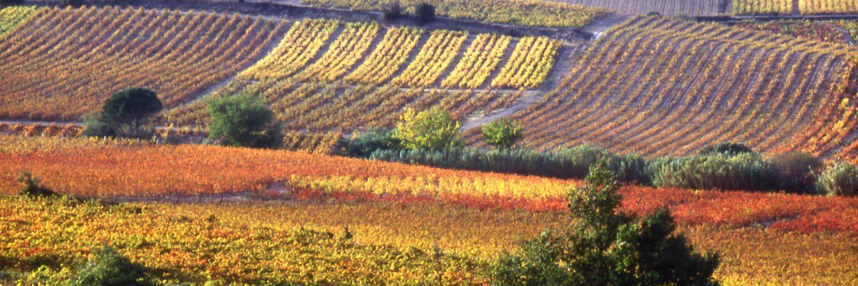 Vallée de l'Agly vignoble automne©MAurice Séguié